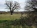 Footpath junction - geograph.org.uk - 1602747.jpg