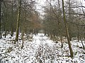 Footpath through Long Wood - geograph.org.uk - 550549.jpg
