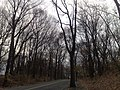 Forest Park, Queens, NY, USA - panoramio (3).jpg