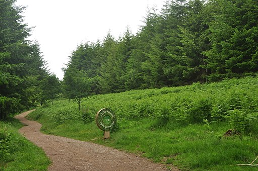 Forest of Dean Sculpture Trail (9809)