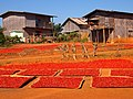 Fresh chilies dry in the sun (Myanmar 2013) (11772592455).jpg