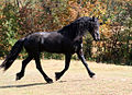 Friesian Horse Side View 2.jpg