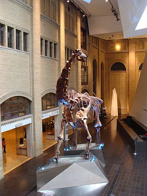 Coniacian - Futalongkosaurus