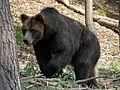 Güstrow, Natur&Umwelt Park28-30.06.08 254.jpg