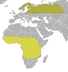 Gallinago media Map.png
