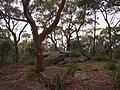 Garawarra Ridge - panoramio (1).jpg