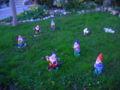 Garden dwarves.JPG