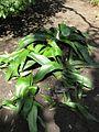 Gardenology-IMG 4991 hunt10mar.jpg