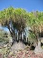 Gardenology.org-IMG 0453 hunt07mar.jpg