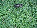 Gardenology.org-IMG 0961 hunt07mar.jpg