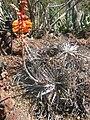 Gardenology.org-IMG 2466 hunt0903.jpg