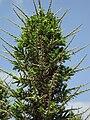 Gardenology.org-IMG 4447 hunt0904.jpg