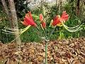 Gardenology.org-IMG 7104 qsbg11mar.jpg