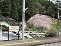Garyuuzakura & hida ichinomiya station.jpg