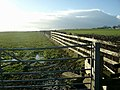 Gate, fence and hedge by the A76 - geograph.org.uk - 330350.jpg