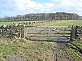 Gate and wood - geograph.org.uk - 358658.jpg