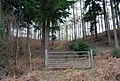 Gate in the woods, Millbank Woods - geograph.org.uk - 1256187.jpg