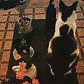 Gato y plantas.jpg