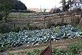 Gemüsegärten in Fioletovo, Armenien.jpg