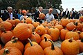 George W. Bush w pumpkins 101906.jpg