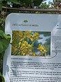 Giardino botanico di Brera (Milan) 331.jpg
