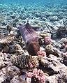 Gigantische Muräne im Roten Meer..DSCF3594ВЕ.jpg