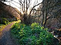 Glen Maye, evening sunlight - geograph.org.uk - 777812.jpg