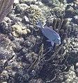 Glover's Reef 2-14 (32960098672).jpg