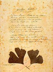 Ginkgo biloba; Goethe erstellte von diesem Gedicht – unter Hinzufügung zweier getrockneter Ginkgo-Blätter – 1815 eine gesonderte Reinschriftfassung; Erstfassung unter Gingo biloba. (Quelle: Wikimedia)
