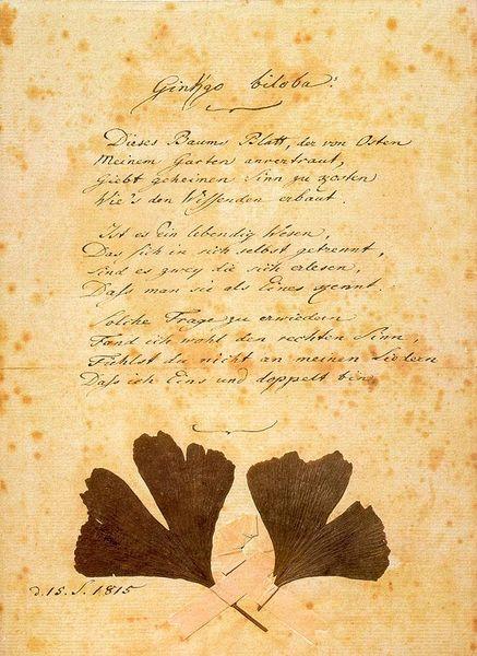 File:Goethe Ginkgo Biloba.jpg