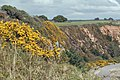 Gorse on the cliff path - geograph.org.uk - 1243456.jpg