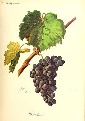Graciano - Image: Graciano Viala et Vermorel