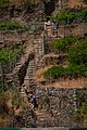 Grape plantation in Manarola, Cinque Terre, Italy 3.jpg