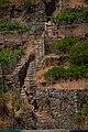 Grape plantation in Manarola, Cinque Terre, Italy 3.jpg