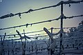Grapevine In Winter (64705275).jpeg