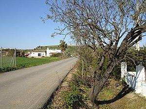Campiña de Jerez - La Greduela, Jerez countryside