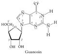 GuanosinN.png