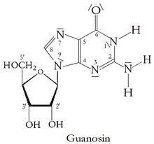 Guanosine With Numbered Carbons
