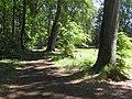 Guteborn, den Born-Rundweg tangierender Waldweg ostwärts, Spätfrühling, 01.jpg