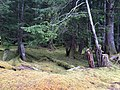 Gwaii Haanas National Park (26945064994).jpg