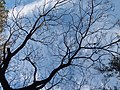 HK CWB 銅鑼灣 Causeway Bay 維多利亞公園 Victoria Park February 2019 SSG blue sky 02.jpg