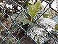 HK ML 半山區 Mid-levels 堅尼地道 Kennedy Road 香港公園 Hong Kong Park green leaves February 2020 SS2 06.jpg