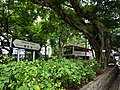 HK TST Nathan Road green Sidewalk Chinese Banyan trees Aug-2015 DSC (22).JPG