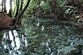 Hamurana Springs near Lake Rotorua (6941584636).jpg