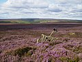 Heather Moorland near Simon Howe - geograph.org.uk - 538087.jpg