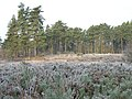 Heathland next to Heath Pool - geograph.org.uk - 121581.jpg