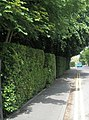 Hedge in South Road - geograph.org.uk - 1362424.jpg