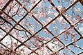 Heian Shrine (5767169898).jpg