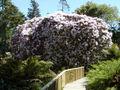 Heligan Rhododendron.jpg