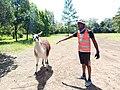 Hello llama.jpg